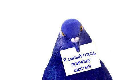 Птица поздравление с днём рождения